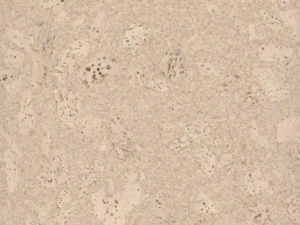 TRECOR® Korkboden mit Klicksystem MAFRA Korkfertigparkett - 10 mm Stark - Farbe: Creme