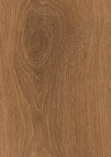 Harlech Oak