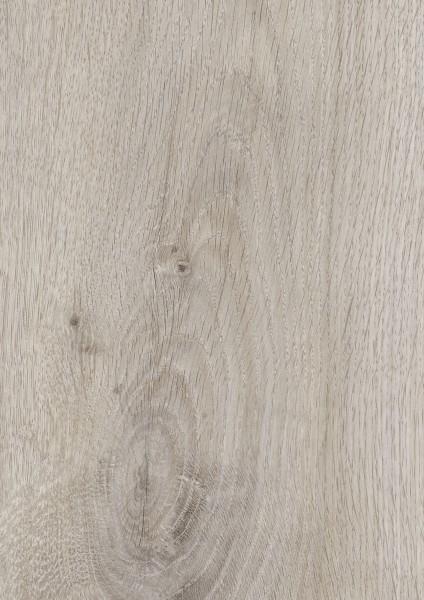 Hardy Oak