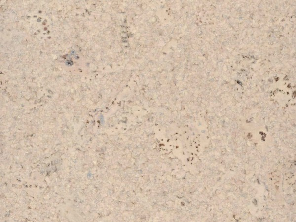 TRECOR® Korkboden mit Klicksystem Lisboa 10 mm Stark - Farbe: Creme
